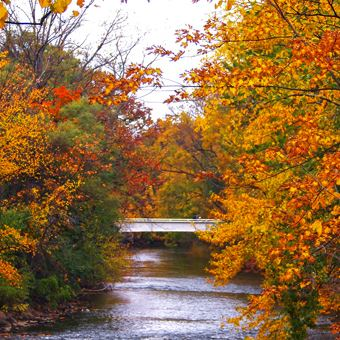 River with fall trees